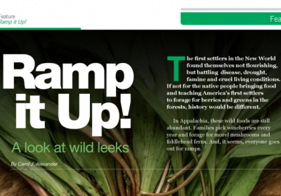 Ramp it Up! A Look at Wild Leeks–AcreageLife, April, 2018