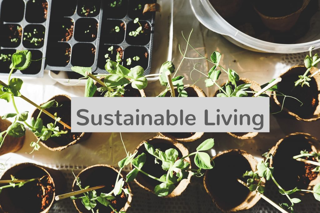 Freelance Sustainable Living Writer | Carol J Alexander